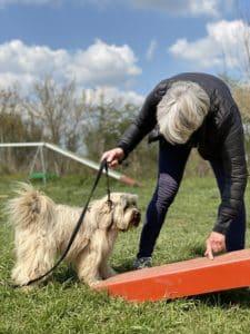 Stage d'initiation à l'AGILITY educhien78 yvelines 78 cliub canin de la plaine de jouars education canine educateur canin