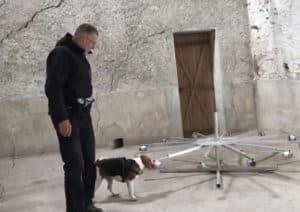 Stage recherche de produits educhien78 education canine educateur canin yvelines 78 club canin de la plaine de jouars
