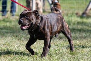 Stage RECHERCHE DE PRODUITS educhien78 educateur canin yvelines 78 club canin de la plaine de jouars